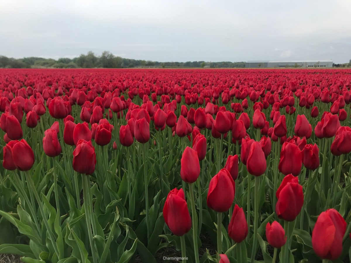 Spring has arrived in the Netherlands & so has lockdown